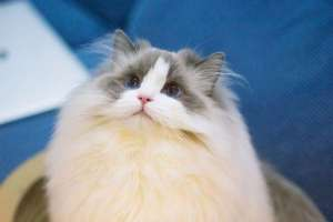 猫猫会得狂犬病吗?