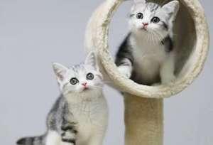 为什么这么多的人都喜欢加菲猫?