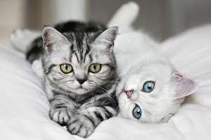 怎么听懂猫咪说话?教你如何听懂猫咪叫声!