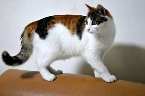 B族维生素与猫咪健康?