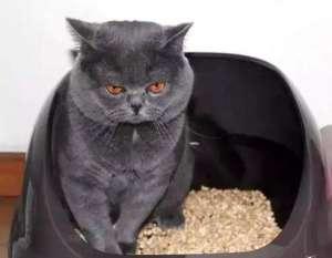 怎么训练猫使用猫砂?