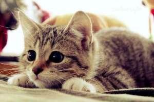 不同的猫应该吃不同的猫粮吗?