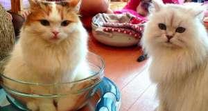 猫咪为什么不喜欢吃甜食?