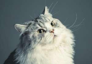 猫1岁了打疫苗晚不晚?