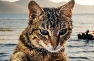 公猫尿闭的原因和治疗?