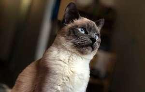 猫咪身上有寄生虫会传染人吗?