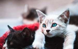 猫咪身上有寄生虫会出现什么症状?