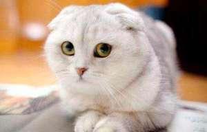 给猫咪洗澡的正确顺序