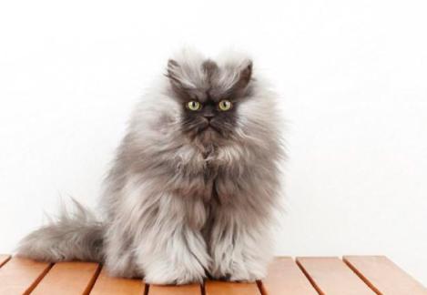 如何防止猫咪抓墙?
