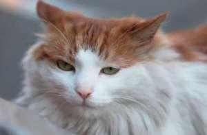 宠物猫咪的寿命一般有多久?