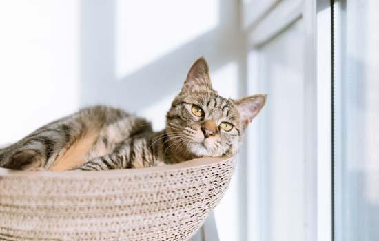 猫生小猫的时候主人是不是不能看