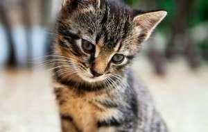 猫三联是什么意思?