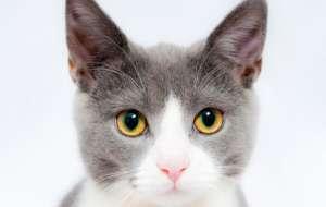 换猫砂猫会不适应吗?