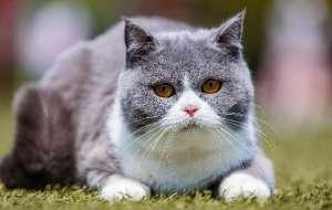 冻干猫粮和普通猫粮有什么区别?