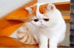 不得不学习的加菲猫饲养家训?