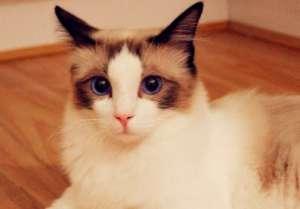 猫咪输液治疗异常及并发症的应对措施!