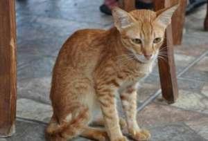 猫咪口炎用什么药?