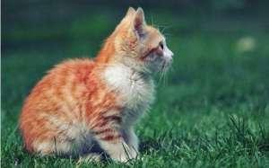 猫咪拉肚子脱水了怎么办?