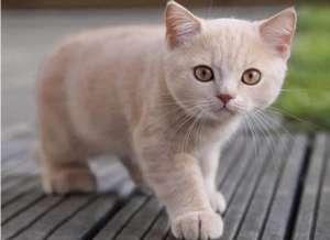 猫毛发黄是怎么回事?