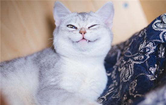 把猫咪关门外会记仇吗