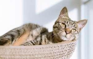 一般猫的寿命是多少年?