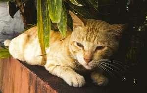 猫会游泳为什么还怕水?