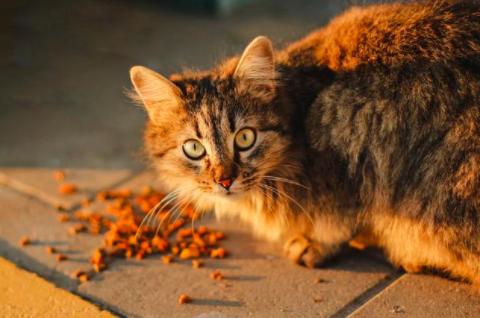 猫生完小猫不吃东西是什么原因?