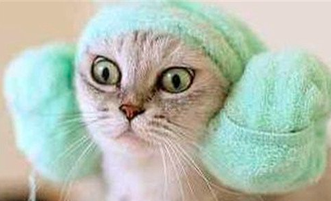 在家帮猫咪洗澡清洁的小技巧 !