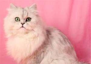 猫咪泪痕重怎么办?怎么变回漂亮的小猫咪 !