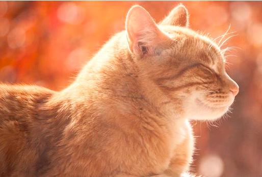 猫产房纸箱怎么做?