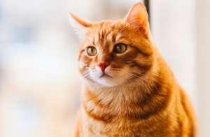 母猫已经见红为什么不生?