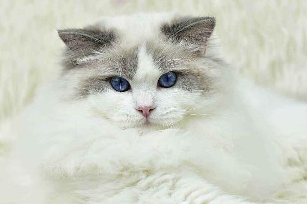 猫吐了是什么原因?