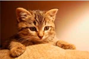 猫为什么吃老鼠?