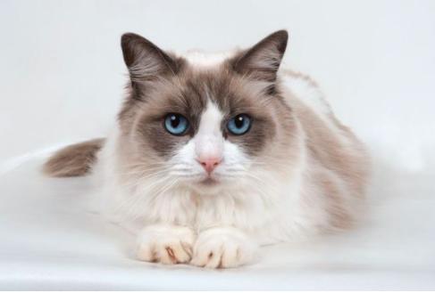 母猫发腮的最佳时机?