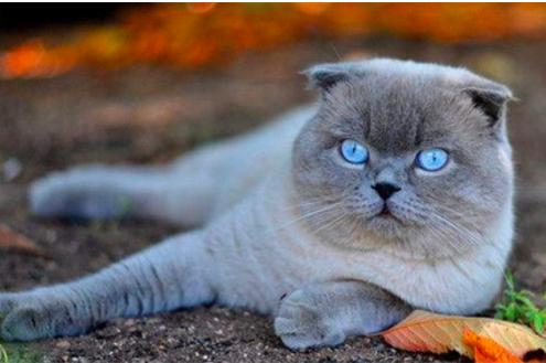猫为什么喜欢吃玉米?