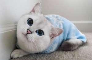 猫肝腹水能自愈吗?