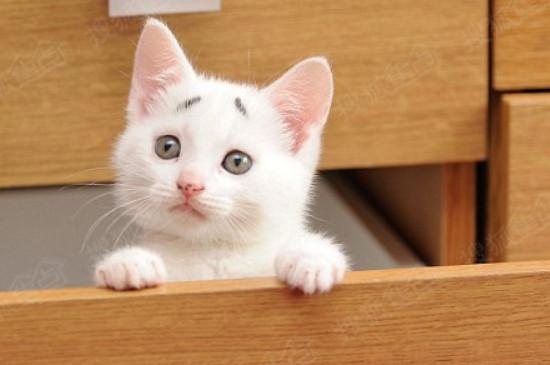 小猫感冒了怎么办用最简单的方法