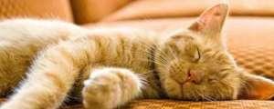 小猫感冒了怎么办?