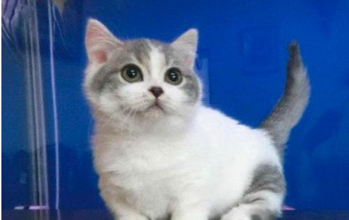 全阶段猫粮是指什么年龄段?