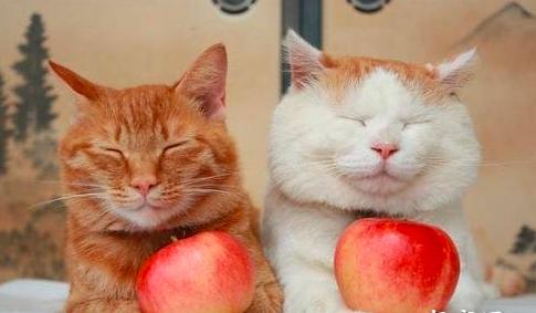 猫咪可以吃的5种蔬菜和猫咪不能吃的五种蔬菜
