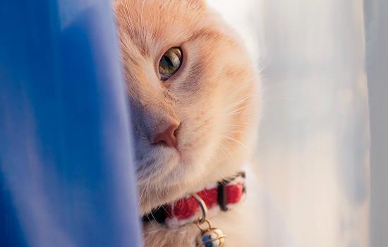 如何让猫进新买的猫窝睡觉
