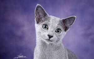 加菲猫脾气不好怎么驯服?