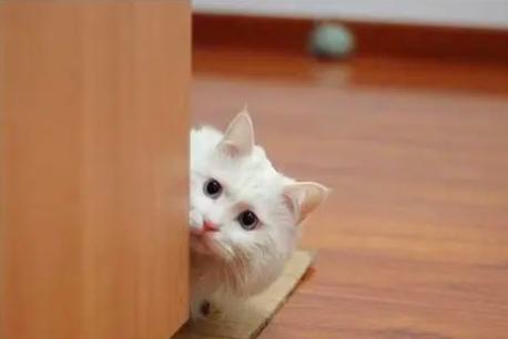 猫咪闻一晚蚊香会死吗?