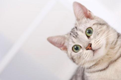 被猫抓了如何处理?