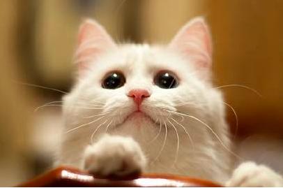 猫的一些生活小知识