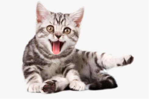 怎么判断猫咪有没有生病?