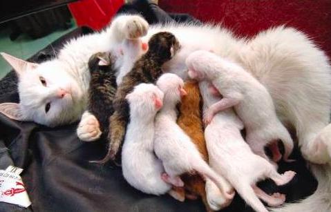 母猫分娩结束后的表现