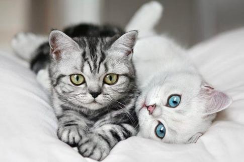 猫咪除了吃猫粮还能吃什么?