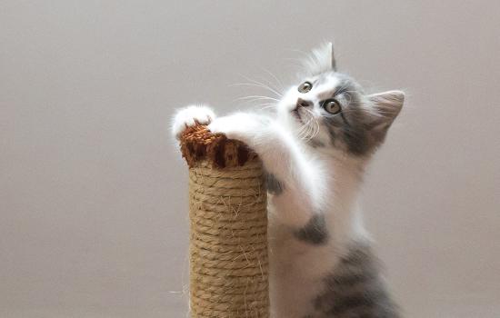 猫产后抑郁有哪些症状