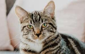 小奶猫太吵了怎么处理?